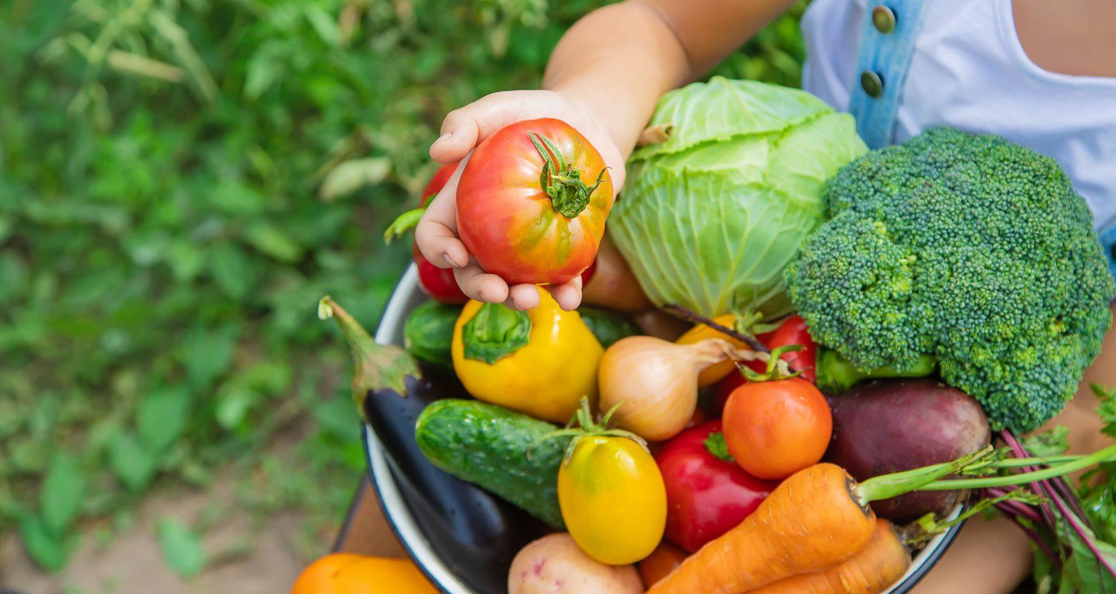 Le Collectif 21 a remis 250 kilos de fruits et de légumes au Centre d'action bénévole de Boucherville cet été