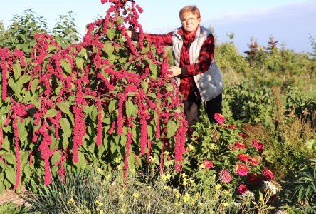 Des jardins pour nourrir, mais pour guérir aussi